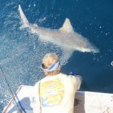 Fish Bomb team and friends caught a Tiger Shark!
